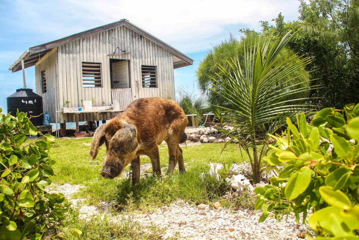 Cozy Cabin with Piggy, Belize